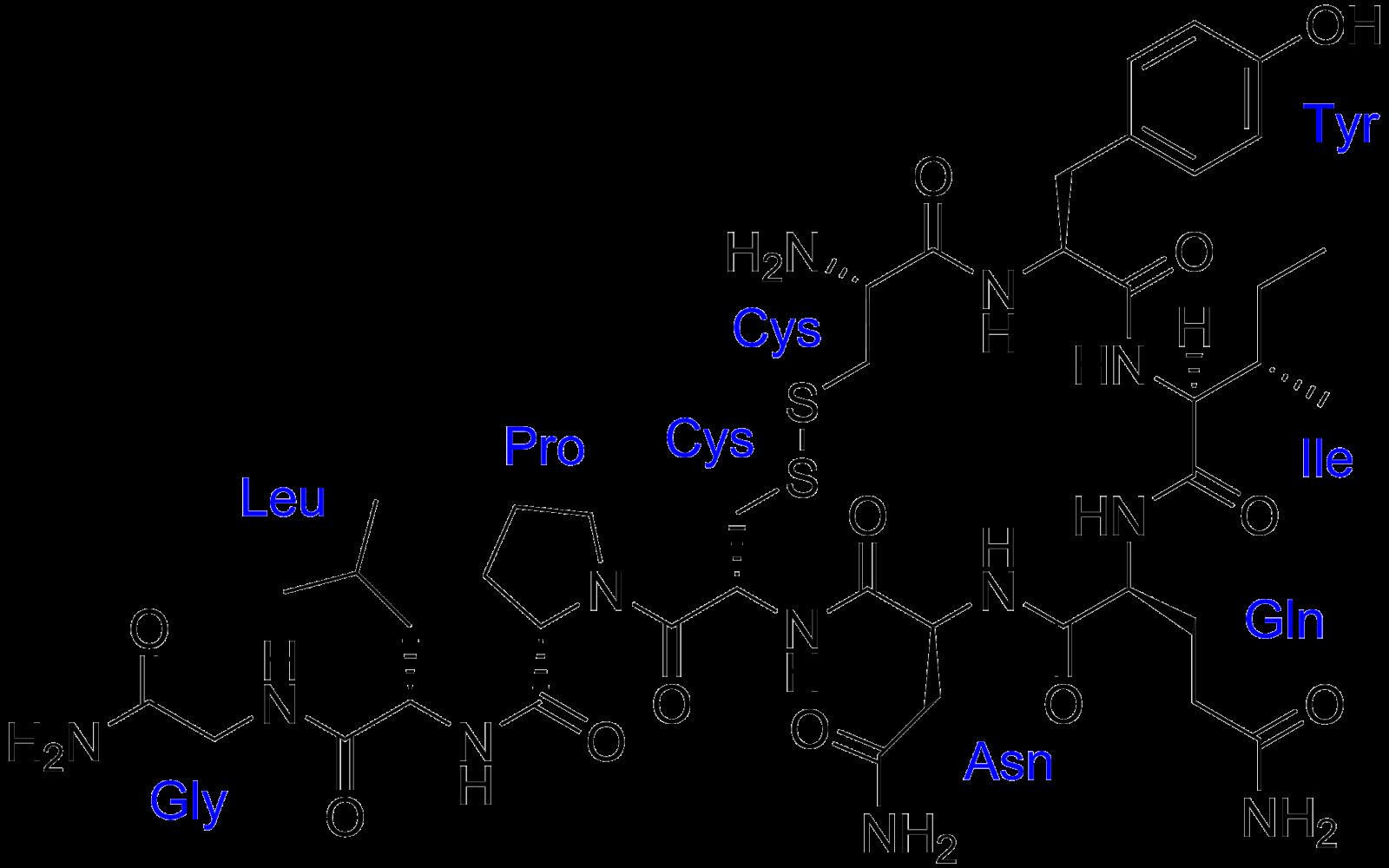 האוקסיטוצין הורמון החברתי השלישי בסדרת הורמוני האושר